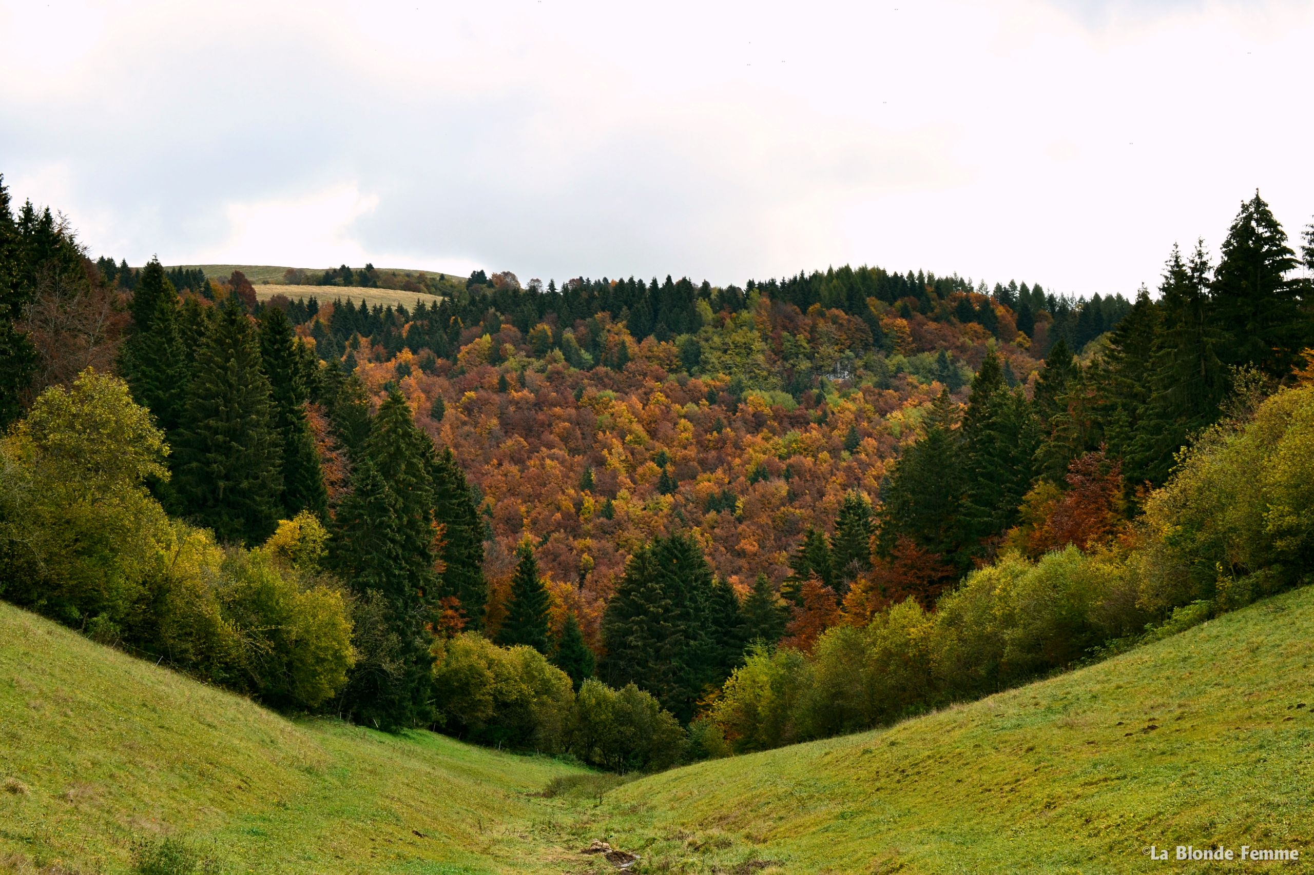 foliage autunnale in Lessinia